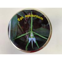 Epidendrum nocturnum (im sterilen Glas)