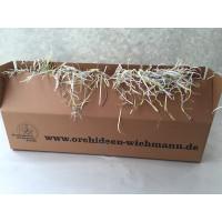 Orchideen-Überraschungs-Sortiment