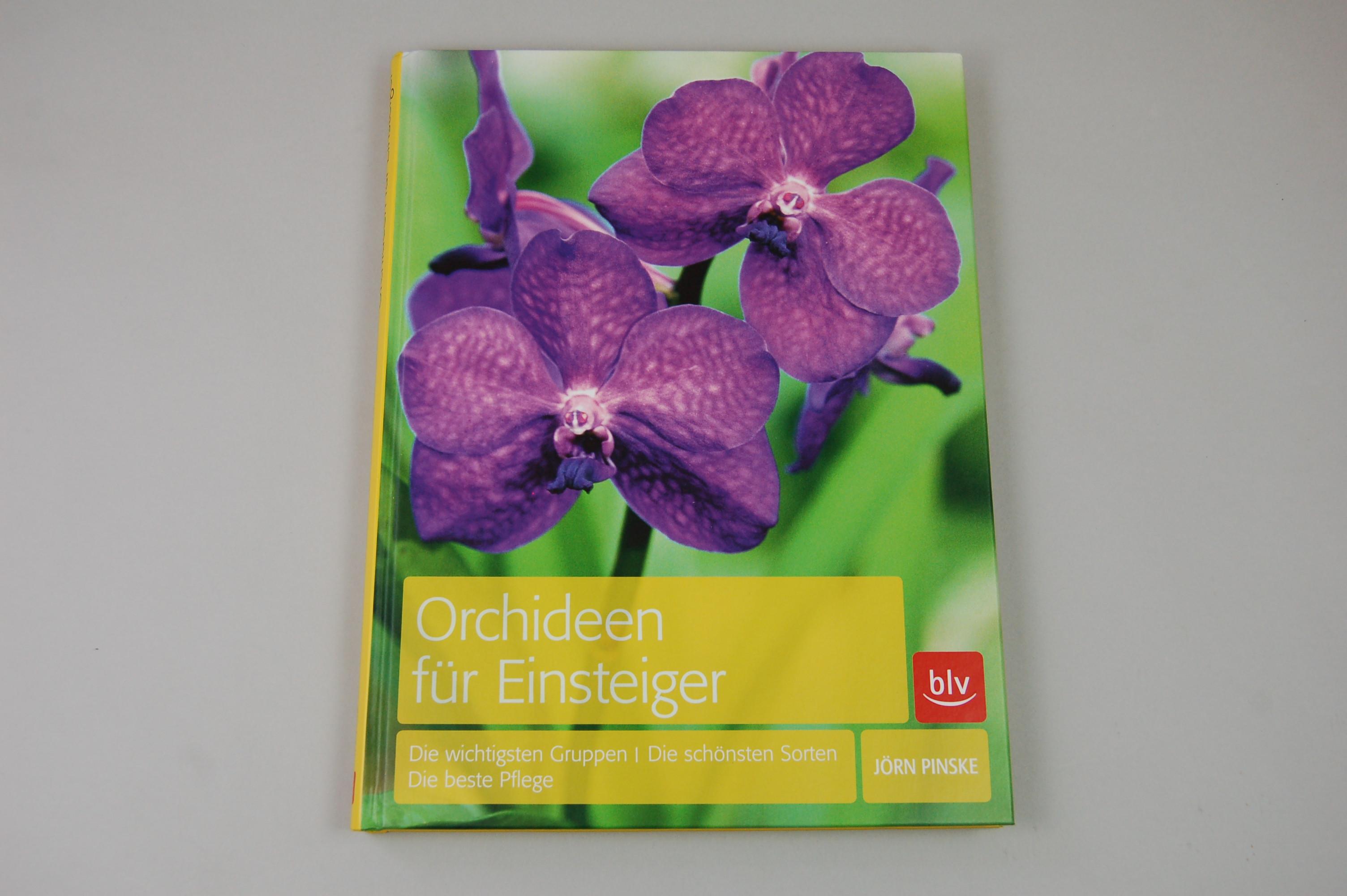 orchideen f r einsteiger. Black Bedroom Furniture Sets. Home Design Ideas