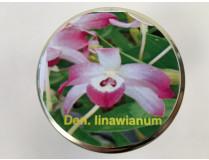 Dendrobium linawianum (im sterilen Glas)