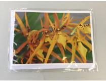 """Grußkarte """"Brassada-Blüte"""" (Klappkarte inkl. Umschlag)"""