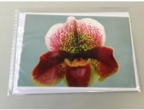 "Grußkarte ""Paphiopedilum-Blüte"" (Klappkarte inkl. Umschlag)"