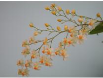Oncidium Tiny Twinkle 'Fragrance Fantasy' (2-3 Rispen)