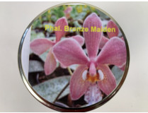 Phalaenopsis Bronze Maiden (im sterilen Glas)