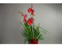 Weihnachts-Präsentpflanze