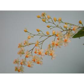 Oncidium Tiny Twinkle 'Fragrance Fantasy' (5+ Rispen)