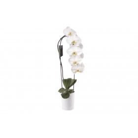 Phalaenopsis Elegant 'Cascade' (inkl. Übertopf)