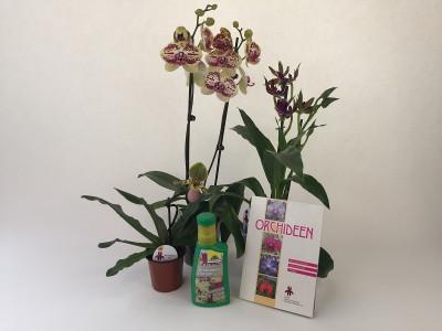Orchideen-Einsteiger-Sortiment