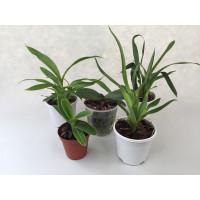 Jungpflanzen Spar-Paket (5 Stück)