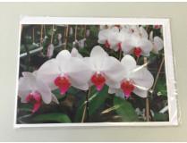 """Grußkarte """"Phalaenopsis-Blüte (gelb)"""" (Klappkarte inkl. Umschlag)"""