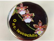 Oncidium leucochilum (im sterilen Glas)