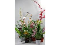 Orchideen Schnäppchen