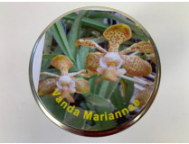 Vanda Mariannae (im sterilen Glas)