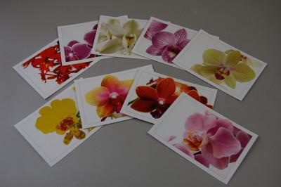 Orchideen Postkarten-Set