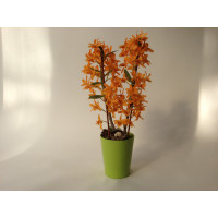 Dendrobium Stardust Firebird (inkl. Übertopf)