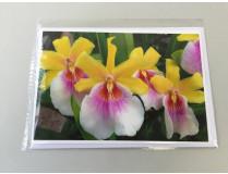 "Grußkarte ""Miltonia-Blüte"" (Klappkarte inkl. Umschlag)"