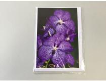 "Grußkarte ""Vanda-Blüte"" (Klappkarte inkl. Umschlag)"