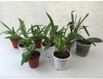 Jungpflanzen Spar-Paket (10 Stück)