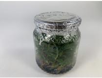 Paphiopedilum javanicum (im sterilen Glas)