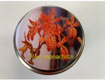 Renanthera monachica (im sterilen Glas)