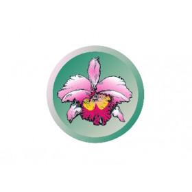 Lc. Golddigger 'Orchidglade Mandarin' HCC/AOS