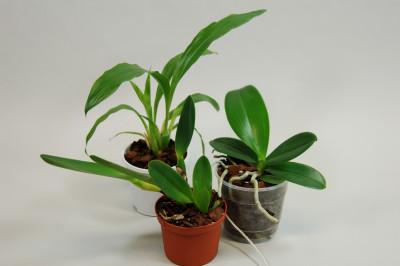 Jungpflanzen Spar-Paket (3 Stück)