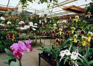 Orchideen Wichmann