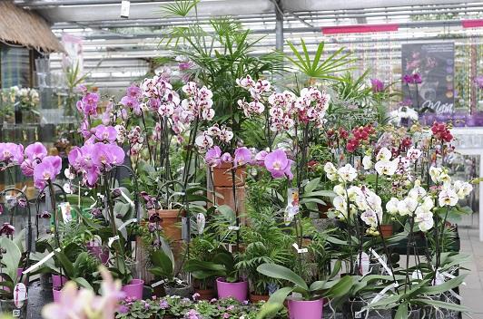Orchideen-Zentrum_Wichmann
