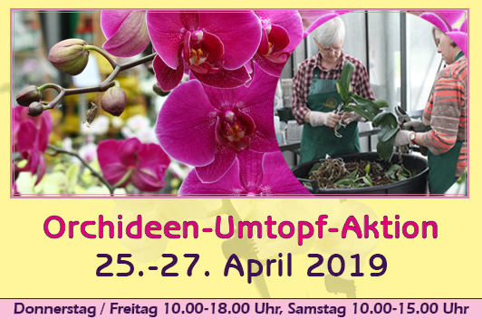 orchid repotting event