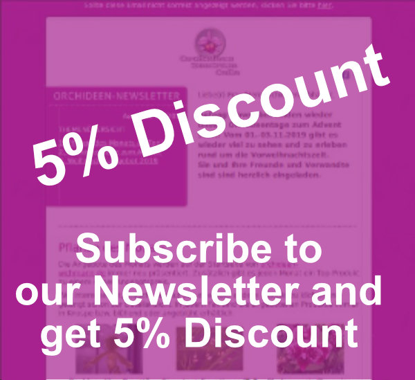 Newsletter 5% discount EN