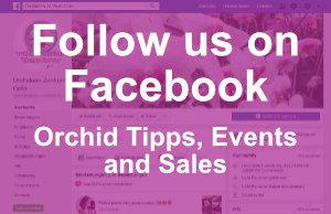 Orchideen Wichmann EN Facebook