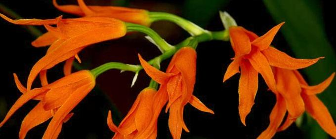 Orchideen Naturform