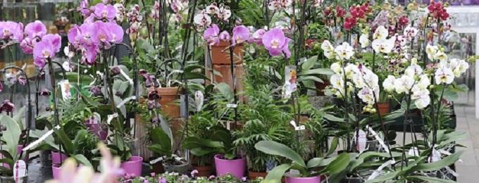 Orchideen Banner