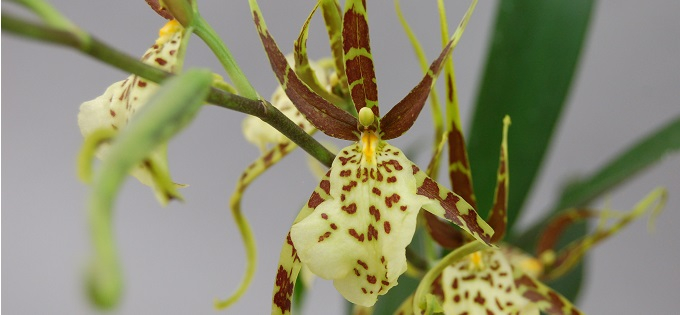Orchideen Empfehlung