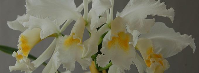 Neuheiten Orchideen