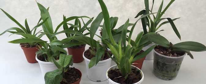 Orchideen Angebote Sale