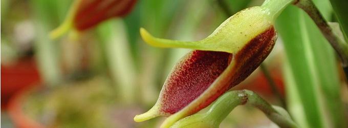 Orchideen bestseller