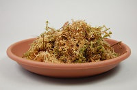 Sphagnum-Moos Orchideen austrocknen verhindern Fensterbank