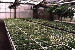 Orchideen vom Züchter