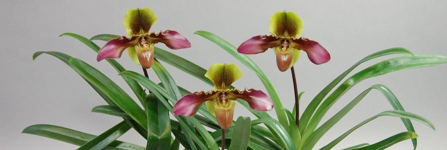 Orchideen Pflege Tipps vom Profis